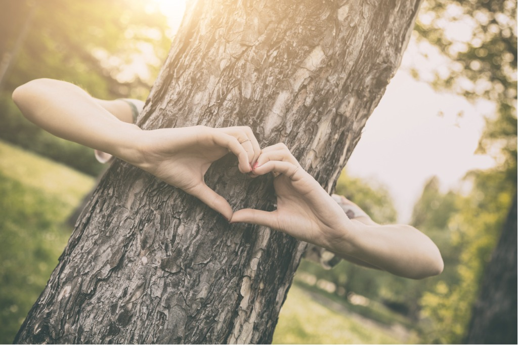 Two hands wrapped around a tree trunk forming a heart.