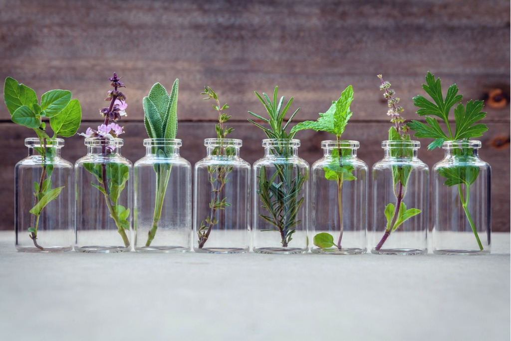 Sprigs of different herbs lined up in separate glass jars.