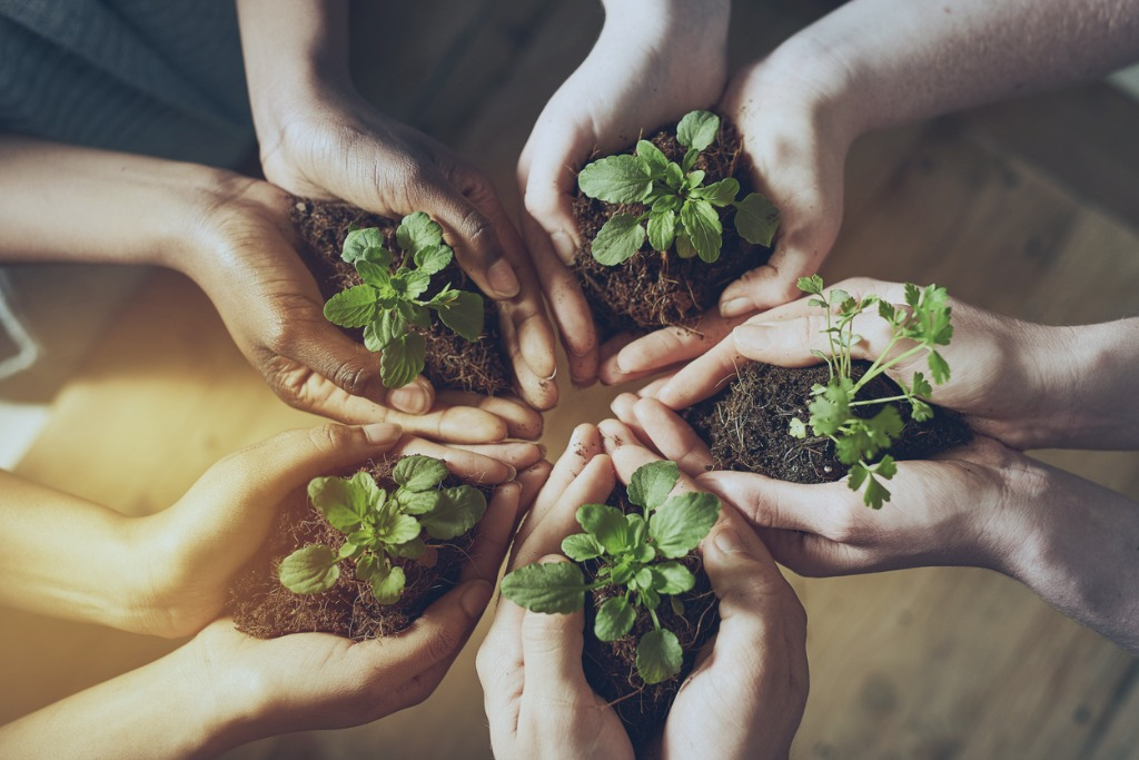 Five hands in a circle each cupping dirt with a plant in it.